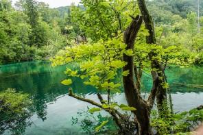La forêt : Actif de développement et d'investissement durable